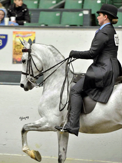 Jennifer A Sullivan Equestrian Judge Amp Video Production